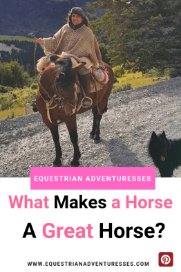 What makes a horse a great horse - Pinterest picture