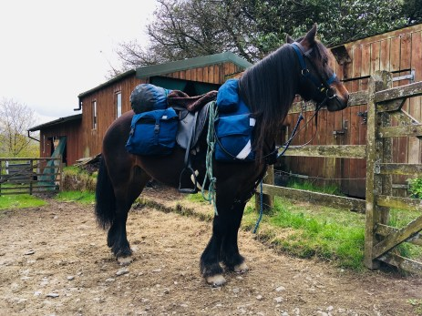 The Fell pony Pansy is all tacked up with bespoke saddle bags and gear for horse trekking in England