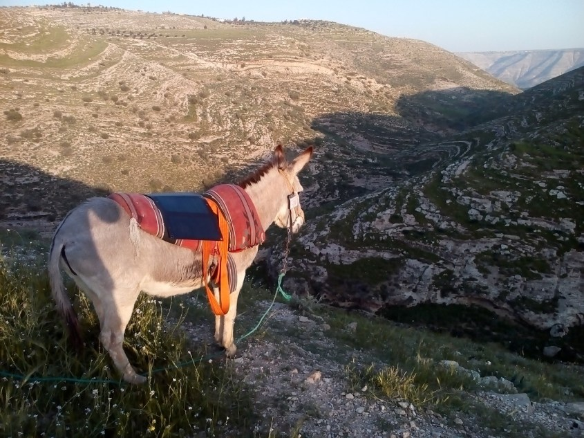 My donkey on the lookout over part of the Jordan Trail