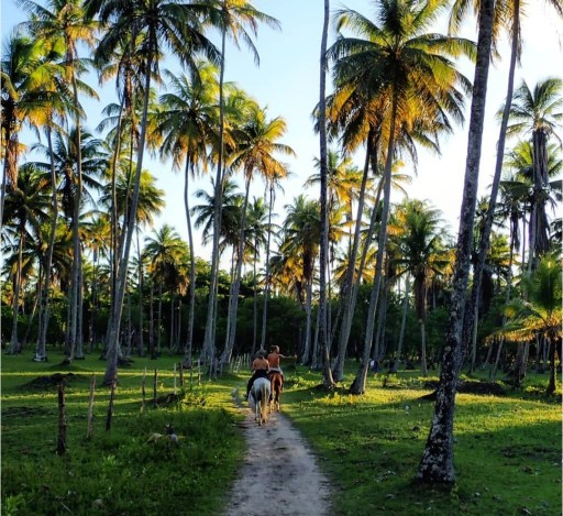 Horse riding in Brazil through an alley of palm trees during sunset
