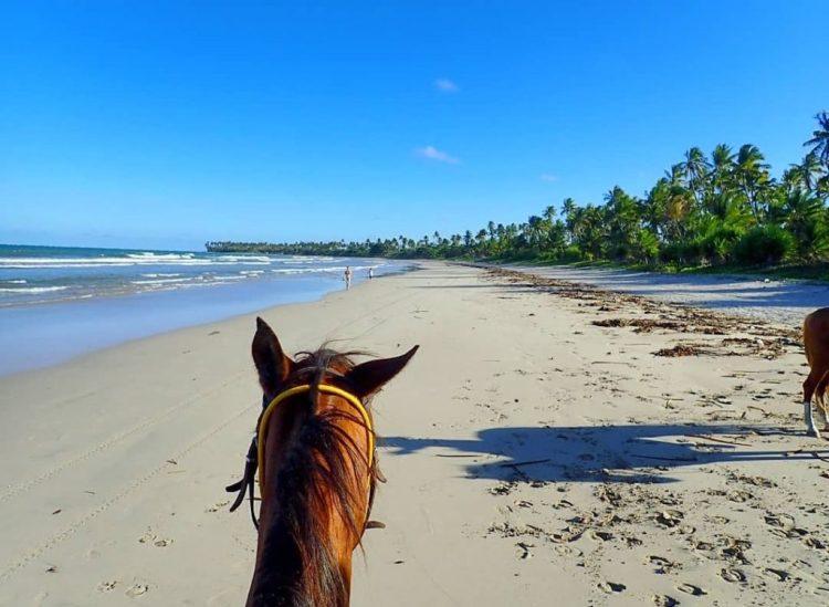 The beach of Boipeba island in Brazil as seen through a horses ears