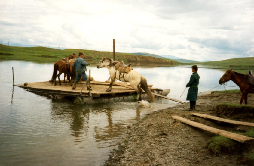 ferry service in Mongolia: Horses are loaded onto a float