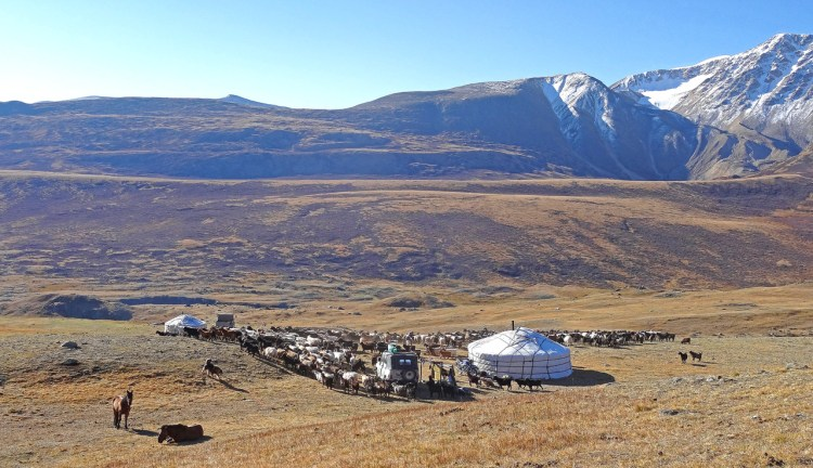 The Eagle Hunters in Mongolia live a nomadic life in gers