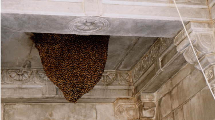 A giant beehive in a temple in Rajasthan