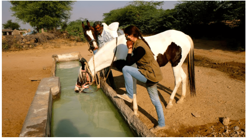 Letting the horse drink water during bareback horse riding across Rajasthan