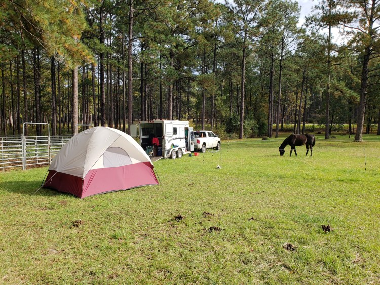 Camping at Gum Springs horse Camp with horses, tent, truck and trailer