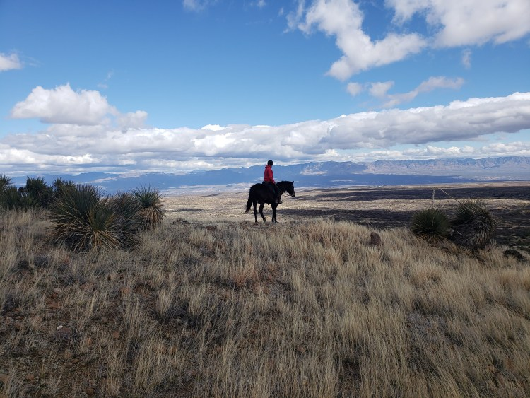 Overlooking the landscape in Oracle, Arizona while riding horses across the USA