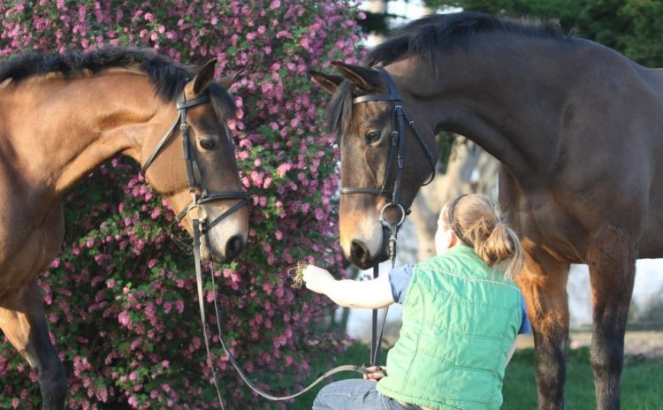 Working with horses in Ireland included to make professional photos with the horses for sales pictures