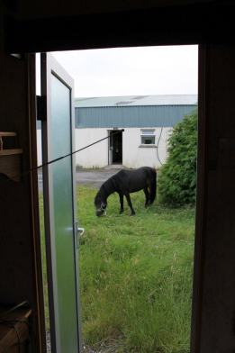 Caitlin's view of of her home while working with horses in Ireland shows a green yard with a grazing horse