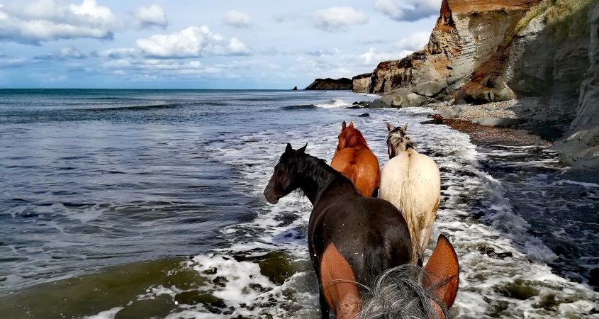 Some wild horses join our group on the shores of Tierra del Fuego while the tide is coming in. A beautiful scene while horse riding in Argentina