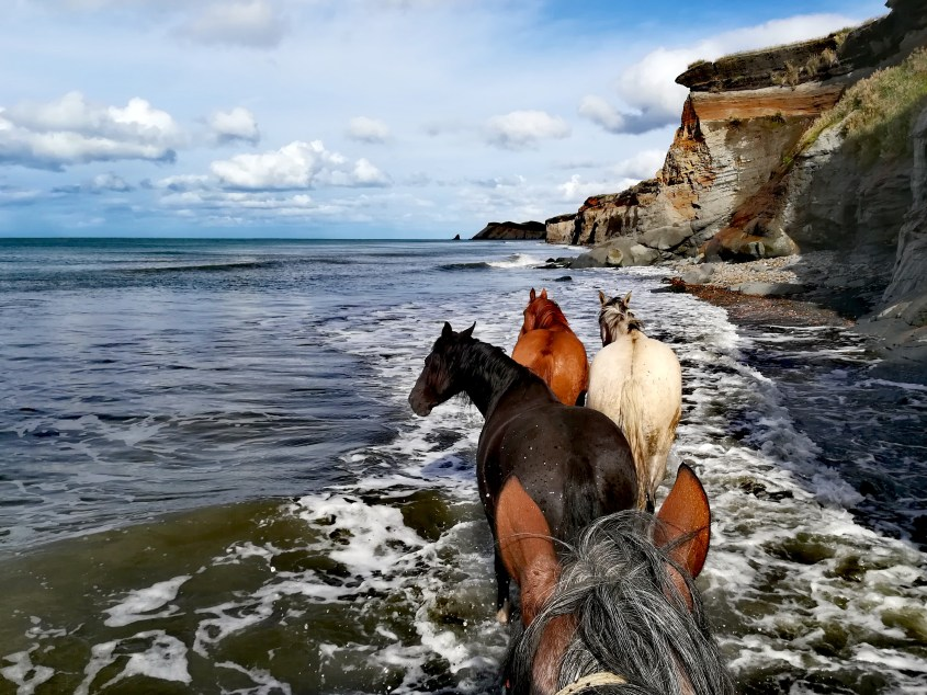 Some wild horse join our group on the shores of Tierra del Fuego while the tide is coming in. A beautiful scene while horse riding in Argentina