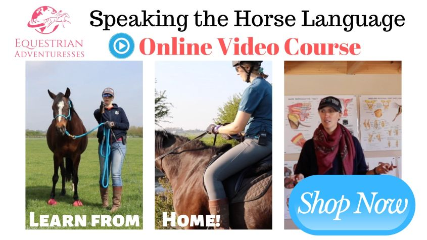Learn how to speak horse and bring your riding and horsemanship to a new level with this great online course! Speak the horse language and work with horses everywhere in the world!