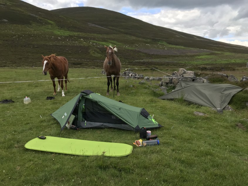 Yogi and Swift, the two horses, stand in their corral behind the horse riding gear under a tarp and the tent for the night in Scotland's wilderness