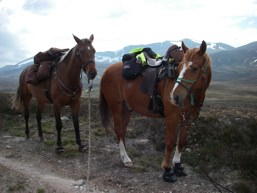 The two horses fully packed in front of a mountain in Scotland with snow on top. Even in summer.