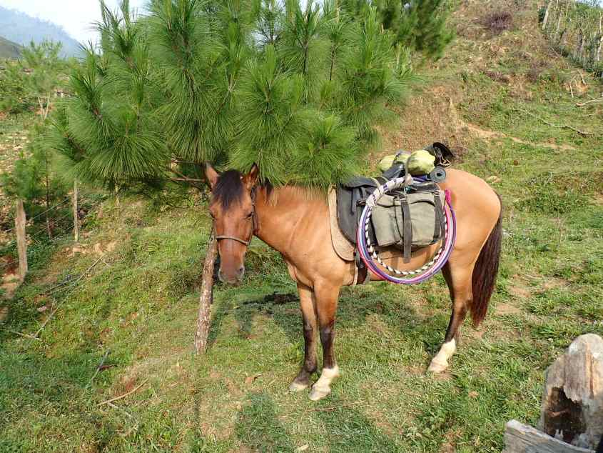A horse loaded up with some gear and most importantly some Hula Hoops. All part of our horse circus caravan