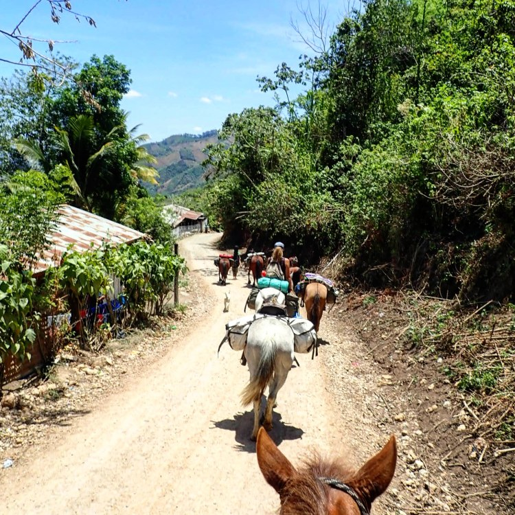 The horse caravan on a dirt road in the heat of the day on their way through Guatemala