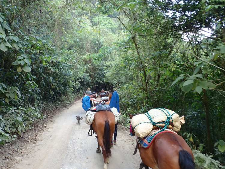 The horse caravan makes its way through the jungle