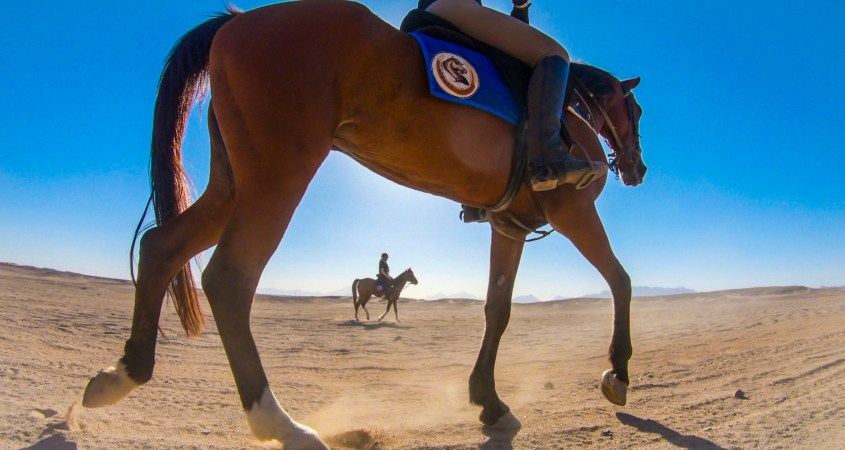Horse riding in Luxor, Egypt