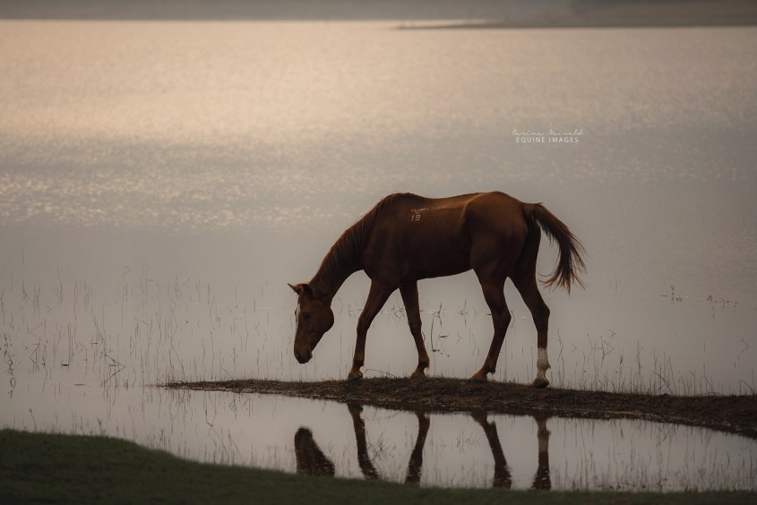 Zelda and Ex-Racehorse is exploring the waterfront of a lake in the Backwater Sanctuary in India