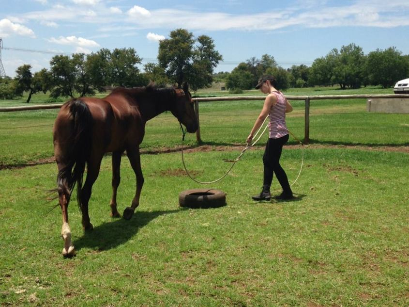 ground work is a effective way to learn how to get your horse to respect you