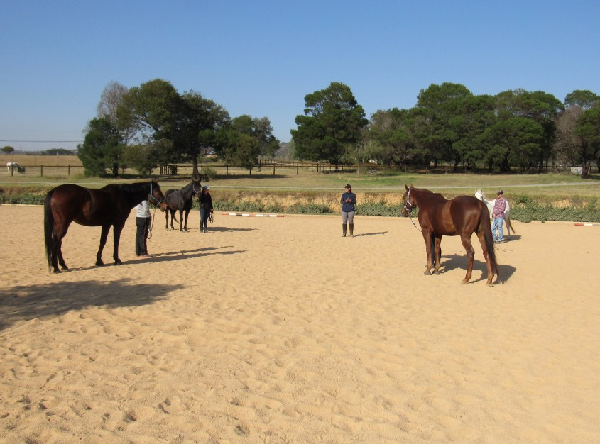 Valentina's mission is to teach people that understanding horses is the first step to effective training