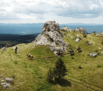 Climbing on the top of a mountain during horse riding in Slovenia.