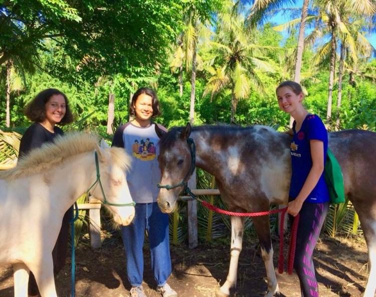 A group of volunteers helping horses on Gili T (short for Gili Trawangan)