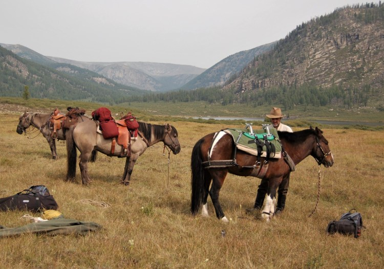 riding and pack horses in Mongolia exploring the wilderness. Tacking up a Mongolian Horse