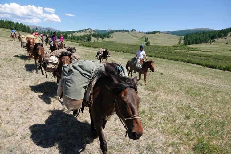 Travelling at fast pace with a group of riding and pack horses