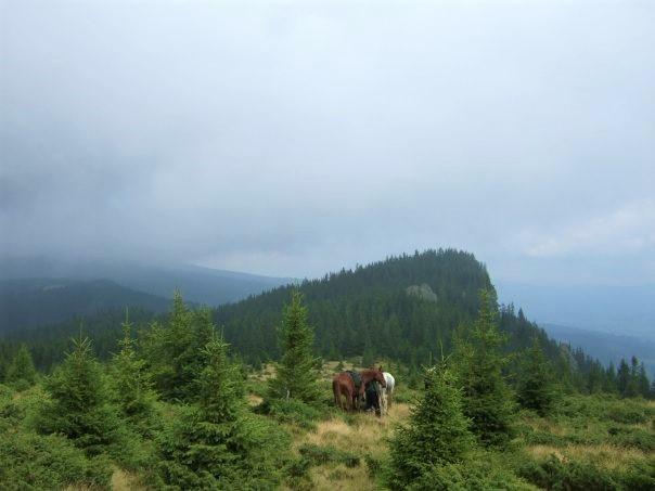 Two horses stand on the edge of a grassy knoll overlooking the distance forests and mountains through a cloudy sky
