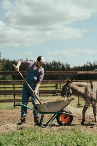 A man shovels hay from a wheelbarrow next to a donkey. Make sure you progress from that after your first Yard and Groom job.