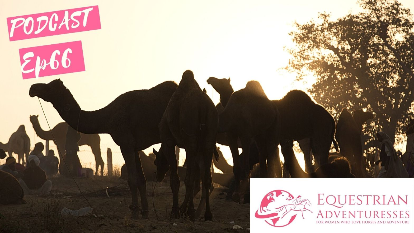 Equestrian Adventuresses Travel and Horse Podcast Ep 66 - Camels, Snake Charmers and Dancing Horses - The Pushkar Festival