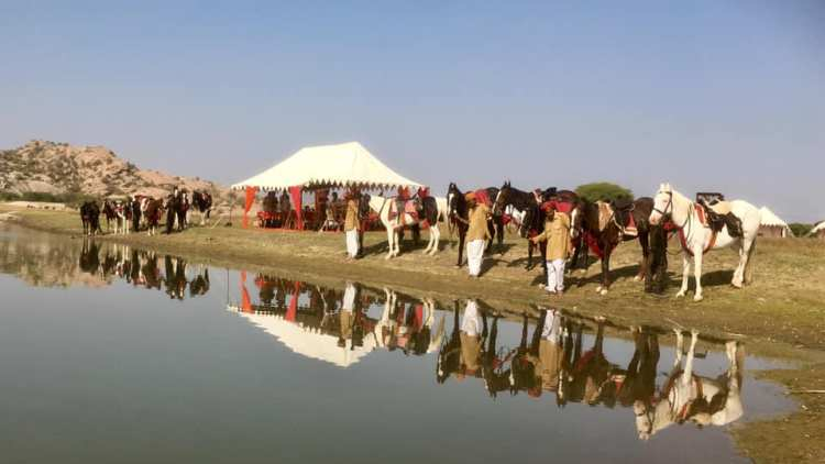 Marwari horses are lined up on the shore of a lake