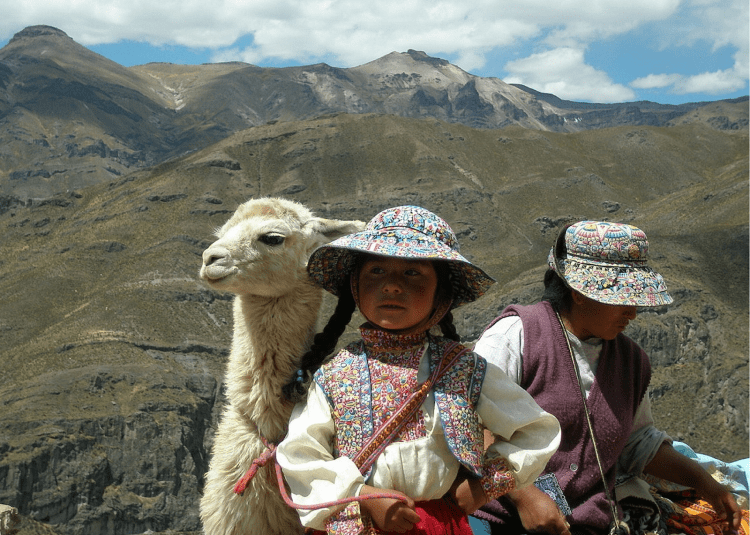Don't forget that horses and horse riding isn't the only passion of the people of Peru. There are Alpacas, too!