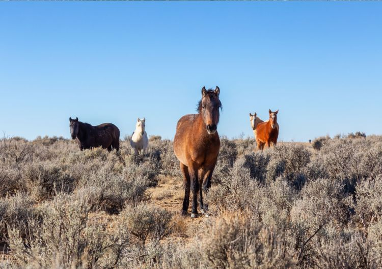 If you're interested in horseback riding in New Mexico, you will also like the wild horses in the high desert