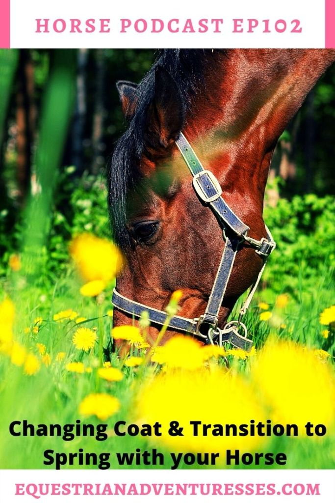 Horse and travel podcast pin - Ep 102 Changing Coat and Transition to Spring with Your Horse