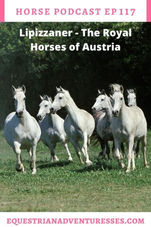 Horse and travel podcast pin - Ep 117 Lipizzaner - The Royal Horses of Austria