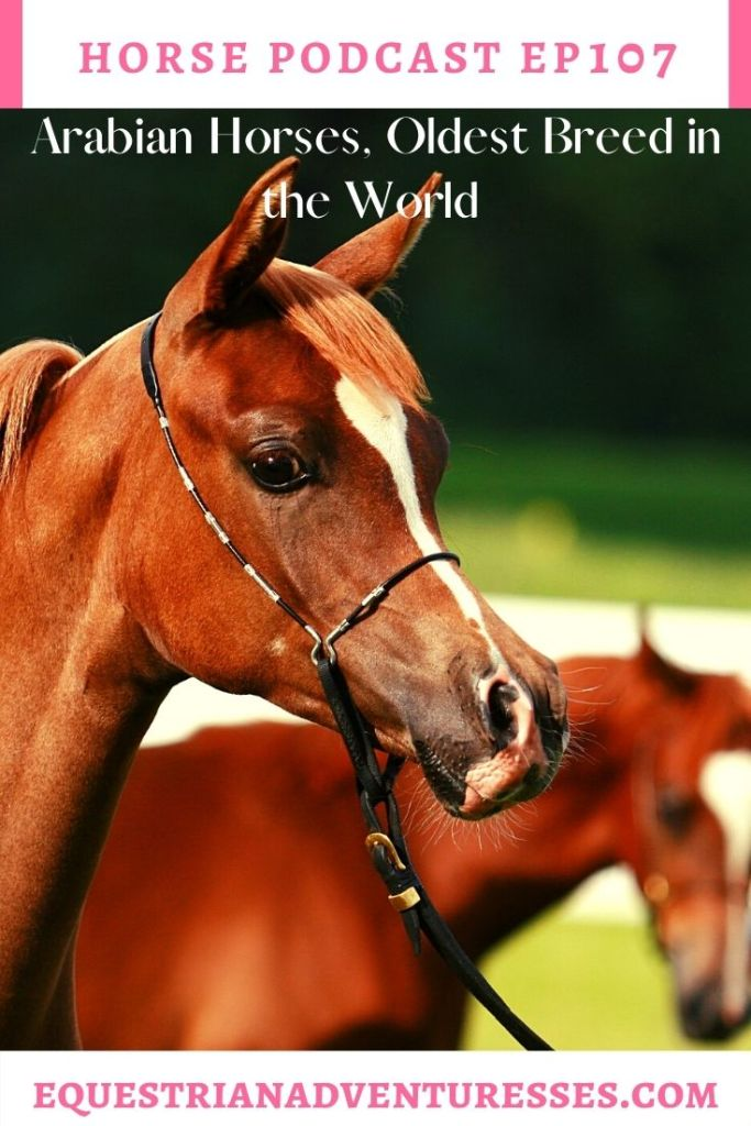 Horse and travel podcast pin - 107: Arabian Horses, Oldest breed in the World