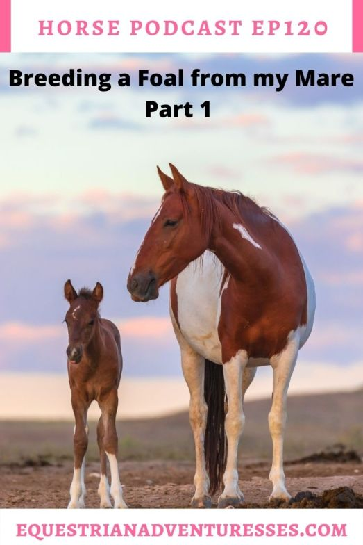 Horse and travel podcast pin - Ep 120 Breeding a Foal from your Mare - Part 1