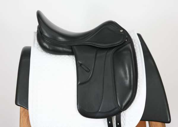 Right Side of Amerigo Vega MF Dressage 18M 14960412