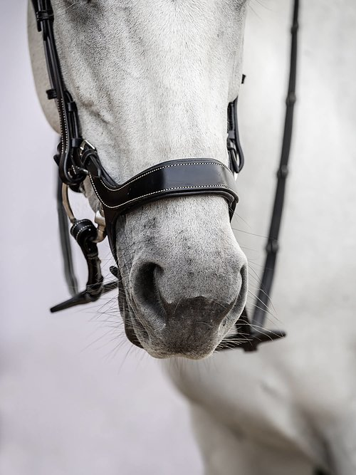 drop noseband
