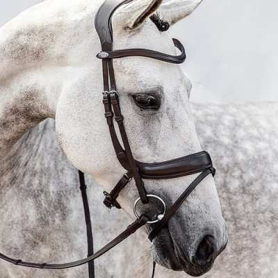 Paladin bridle Ps of sweden