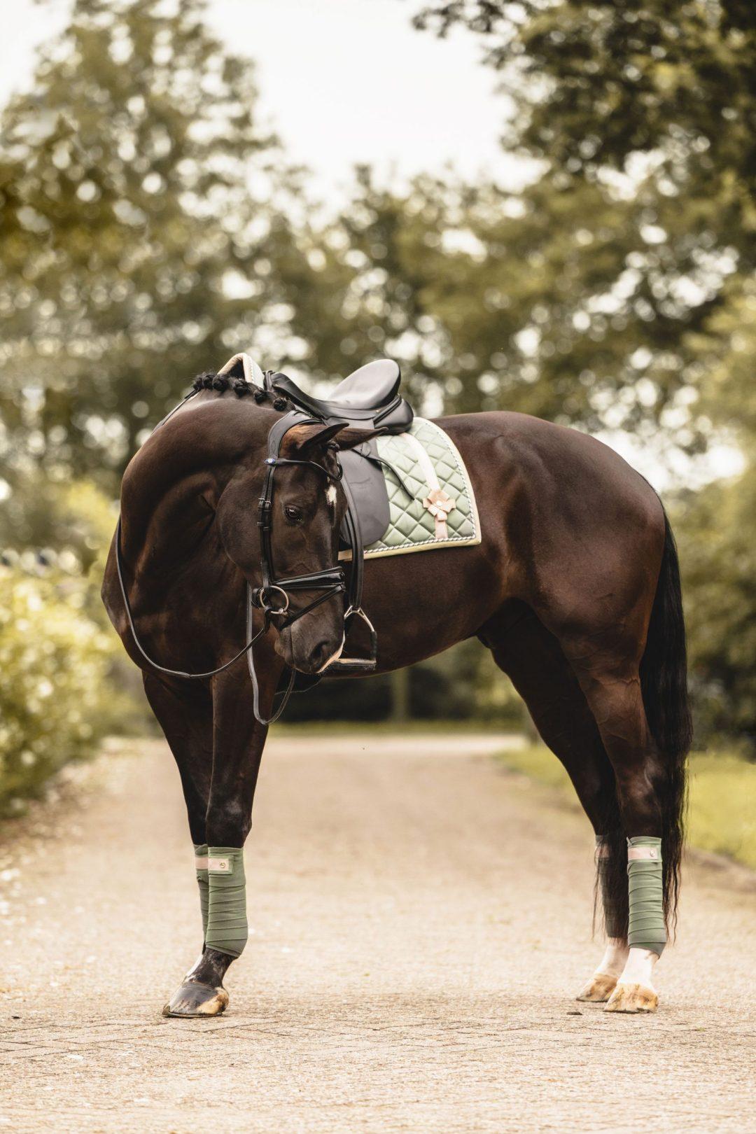 polo saddle pads matchy matchy