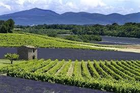 Entre vignes et lavandes