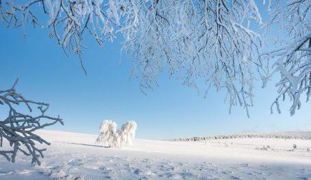 Symptômes hivernaux