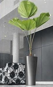plante-interieur