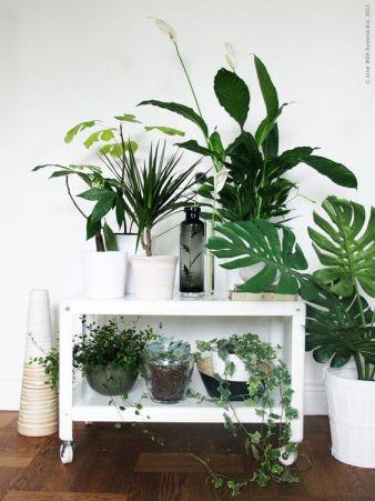 déco plantes vertes