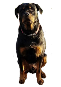 Supplments for dogs   Canine Nutrition   Canine Health