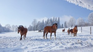 Horse Supplements, Equine Nutrition, Winterizing hard keeper Horses