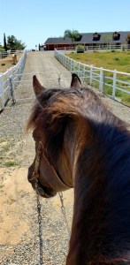 Equine Challenge Blog, Home Sweet Home